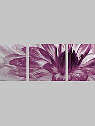 Натяжные Печать холст искусства Цветочные фиолетовый съемки Набор из 3
