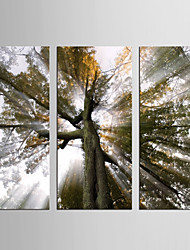 Canvas Set Landscape Floral/Botanical Modern Realism,Three Panels Canvas Vertical Print Wall Decor For Home Decoration