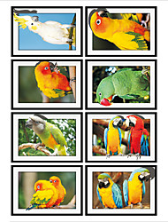 Parrot Photo Frame Drawing  PVC  Decorative Skin Wall Stickers for The Office Or Living Room