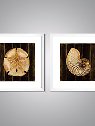 Framed Canvas Prints Modern Picture Print on Canvas The Flower and The Shell for Home Decoration