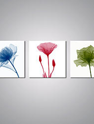 Stretched Canvas Prints Flower Painting  Picture Print Contemporary Art for Livingroom Decoration