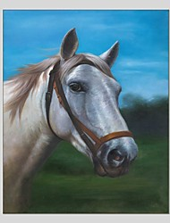 Oil Paintings Horse Style Canvas Material With Wooden Stretcher Ready To Hang Size60*90CM and 50*70CM .