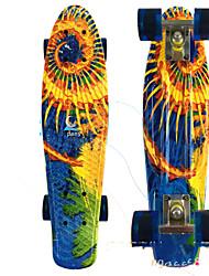 PP (Polipropileno) Adulto Skates padrão 22 polegadas Profissional ABEC-7-Branco Laranja Amarelo Vermelho Azul