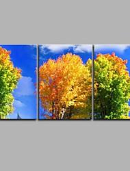 Peint à la main Botanique Artistique Inspiré de la nature Moderne/Contemporain Bureau / Affaires Trois Panneaux ToilePeinture à l'huile