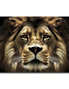 Reproduction transférée sur toile Art Lion d'animaux par SD intelligente