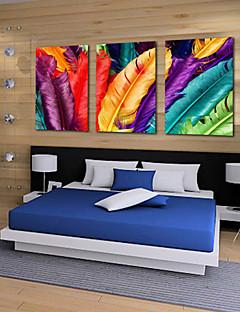 Trasferimenti su tela Art Still Life Piume colorate Set di 3