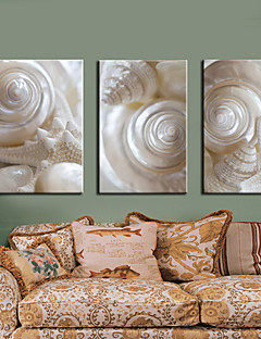 Stretched Canvas Print Art Still Life White Conch Set of 3