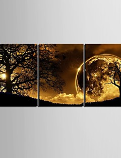 Stretched Canvas Art Dusk Under The Tree Set of 3