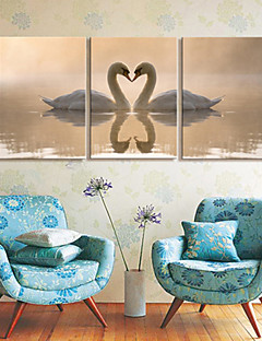 Toiles Tendues art animalier Swan Lovers Lot de 3