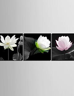 Taulupohjat taide Kukat Elegant Lotus Sarja 3