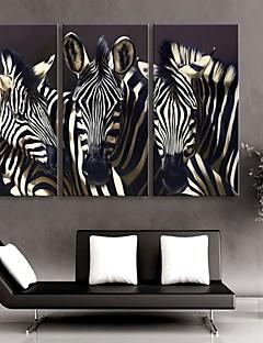 е-Home® растягивается холсте зебра-декоративной живописи набор из 3