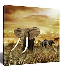 star®decorative art visuel de mur de toile imprimée éléphant rétro, toile tendue prêt à accrocher 24''x24 ''