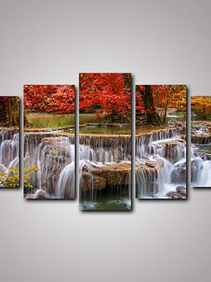 Paesaggio / Botanical / Fotografia / Realismo / Viaggi Print Canvas Cinque Pannelli Pronto da appendere , Orizzontale