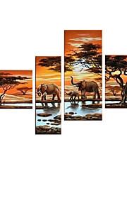 시각 star®africa 코끼리 동물 유화 손으로 그린 캔버스 벽 예술 수제 오일 중단 할 준비가 그림