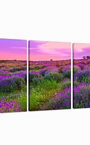 star®lenvader visuelle toile tendue Impression 3 panneau de toile de haute qualité art prêt à accrocher