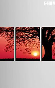E-Home® Leinwand Kunst Sonnenuntergang unter dem Baum Dekoration Malerei Set von 3