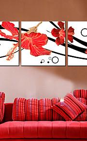 Kasvitiede Canvas Tulosta 3 paneeli Valmis Hang , Neliö