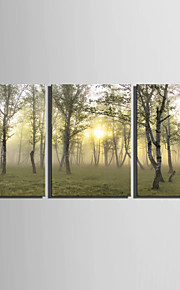 E-HOME® Stretched Canvas Art Woods Decoration Painting  Set Of 3