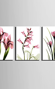 E-HOME® Stretched Canvas Art Transparent Pink Flowers Decoration Painting  Set Of 3