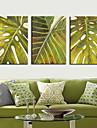 Toiles Tendues Art botanique Green Leaf Lot de 3