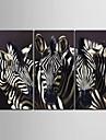 e-Home® sträckta canvas konst zebra dekoration målning uppsättning av 3