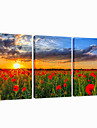 VISUAL STAR®Garden Stretched Canvas Print Modern Sunrise Triptych Wall Art Ready to Hang
