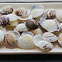 浜テーマの殻 - 4パック入り(40個/パック)