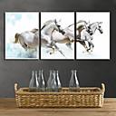 Ispruži platnu print Art životinja White Horses