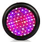 LED rasvjeta za uzgoj biljaka 3500 lm Hladno bijelo / Plavo / UV (crno svjetlo) / Crveno Visokonaponski LED AC 85-265 V 1 kom.